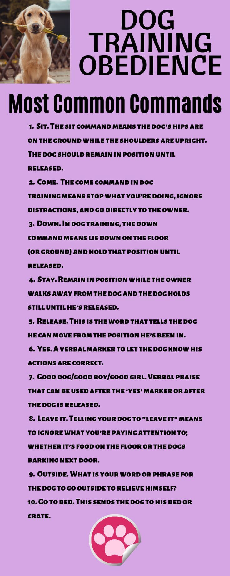 Dog Training Obedience Most Common Commands Make Sure Your Dog