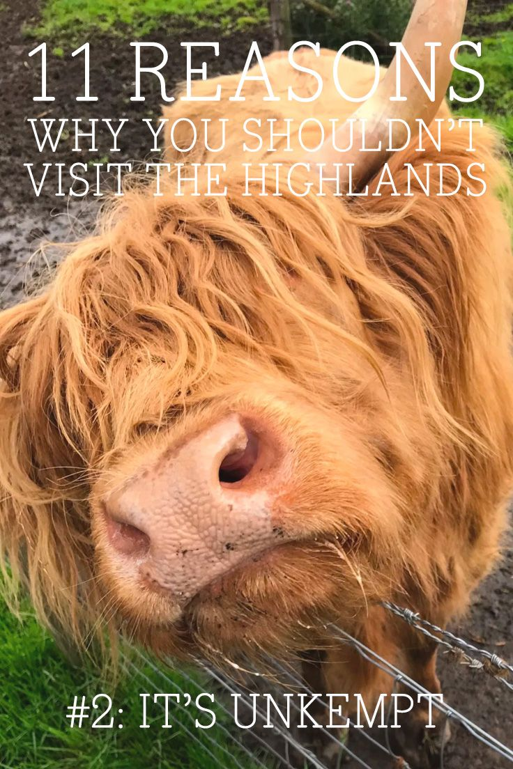 "Dark colours, crumbling castles and unkempt creatures are all part of the supposed ""charm"" of The Highlands. It's too much. Don't go. 😉🐮"