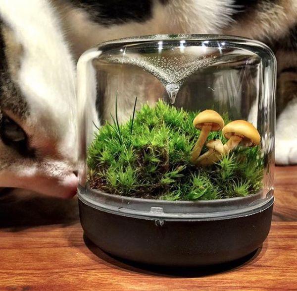 Bring the outdoors indoors with Botanica Boutique Sanctuary mossarium range