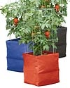 Tomatoes: Colorful Tomato, Food, Grow Bags, Gardening, Homegrown, Tomato Grow, Tomatoes