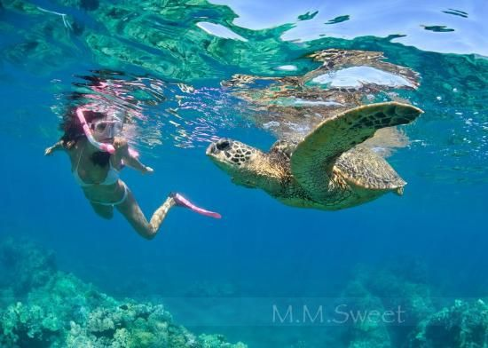 Cozumel Cruise Excursions: Snorkeling with Sea Turtle in Cozumel Mexico