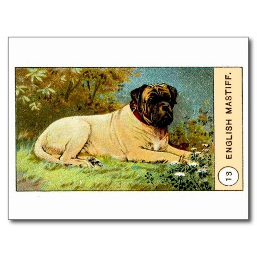 >>>Cheap Price Guarantee          Antique 1908 English Mastiff Dog Cigarette Card Post Card           Antique 1908 English Mastiff Dog Cigarette Card Post Card Yes I can say you are on right site we just collected best shopping store that haveHow to          Antique 1908 English Mastiff Dog...Cleck Hot Deals >>> http://www.zazzle.com/antique_1908_english_mastiff_dog_cigarette_card_postcard-239094623556467614?rf=238627982471231924&zbar=1&tc=terrest