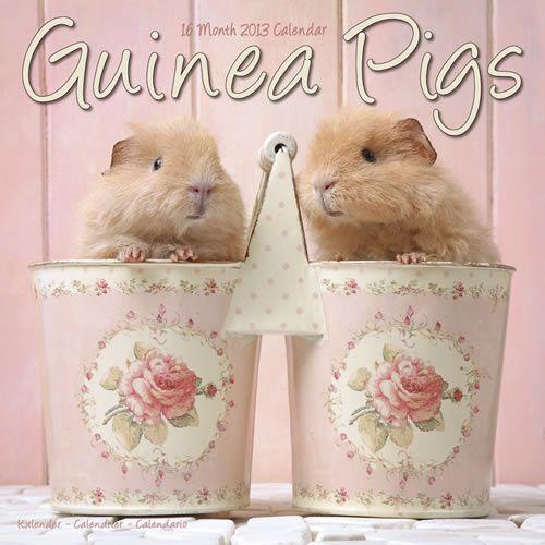 Guinea Pigs 2013 Calendar 11117-13