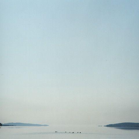 Dartmouth Ducks - mlheureuxroy