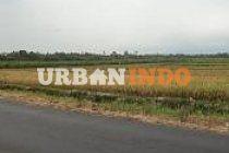 DIjual cepat sawah Irigasi, luas 70 hektar satu blok, truk bisa lewat, cocok untuk perumahan, status jalur hijau untuk persawahan, harga spesial Rp 100 ribu/m, sudah di kondisikan dengan lurah setempat