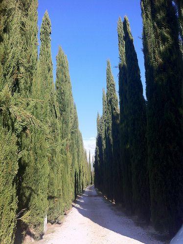 The road to Tenuta #Valdipiatta. That's Tuscany. (photo by LocandaSanFrancesco #boutiquehotel #Montepulciano)
