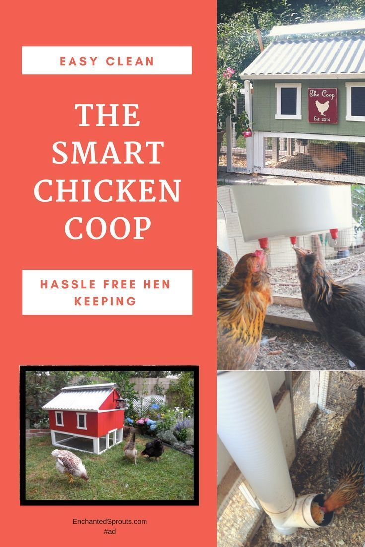 Hassle Free Backyard Chicken Keeping. Easy To Clean Backyard Chicken Coops.  #chickens #