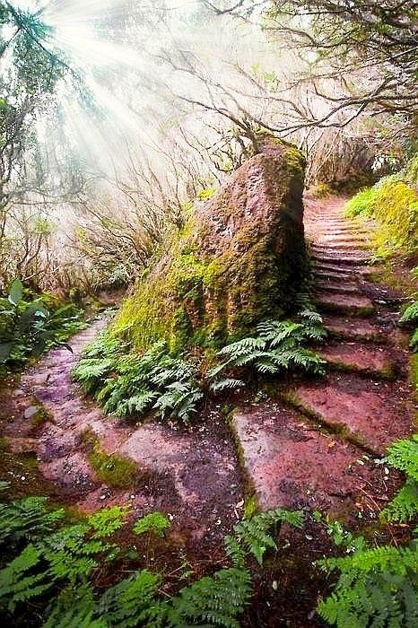 Secret Paths - Madeira, Portugal
