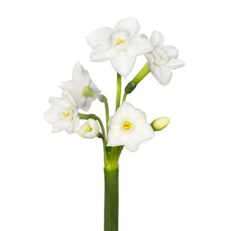 Your Guide to Wedding Flowers   TheKnot.com