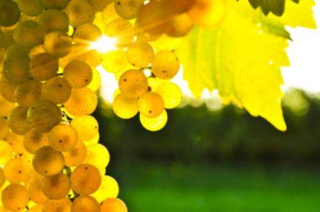 Randy Caparoso (formerly of Roy's) reviews 2013 Carneros Chardonnay