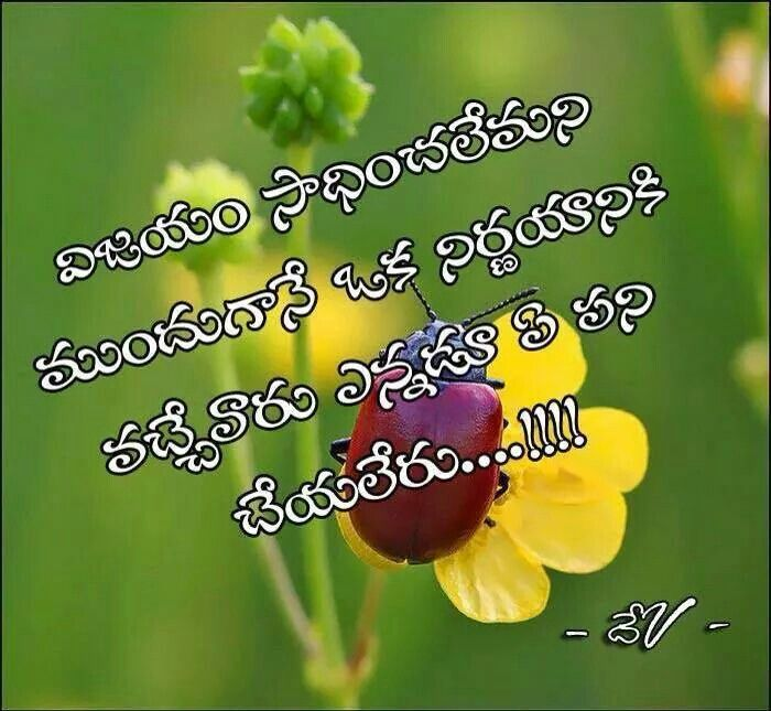 1000+ Images About Telugu Quotes On Pinterest