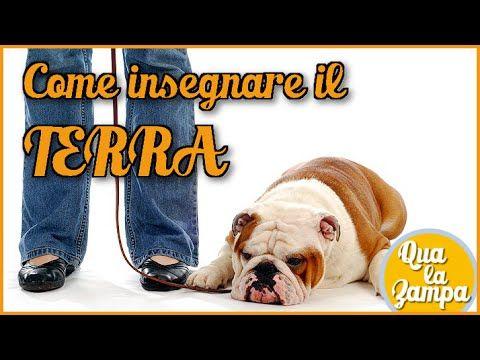 Addestramento/Educazione cani n°2 - Come insegnare il TERRA | Qua la Zampa