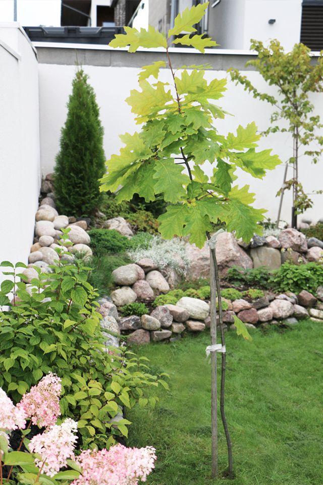Garden at Hedda's