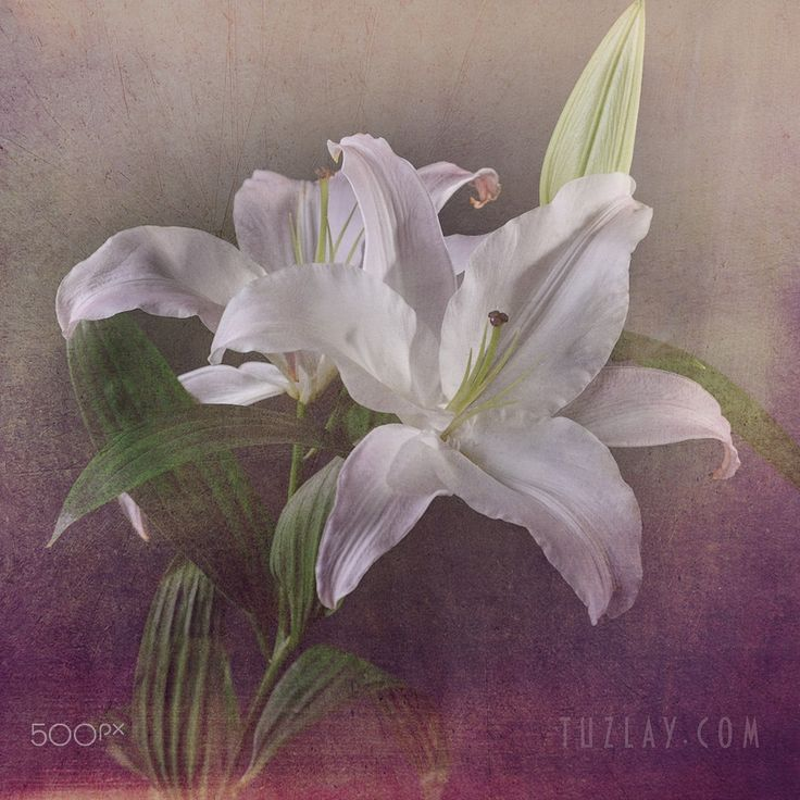 Just a flower) - null