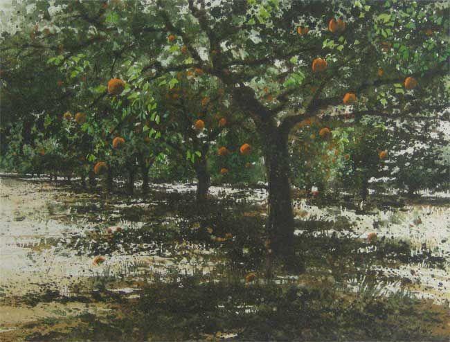 Naomi Tydeman RI, Orange Grove