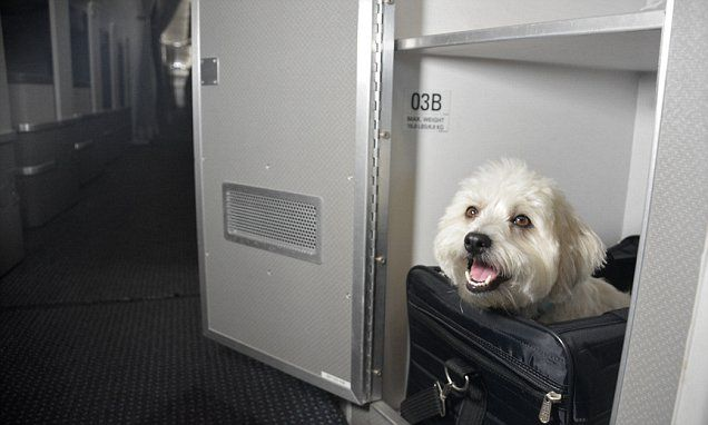 American Airlines has just introduced premier seating for pets