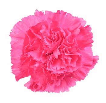 Find This Pin And More On Hot Pink Flowers