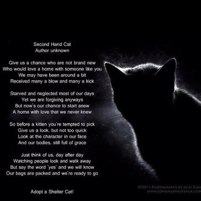 Cats Don T Care Poem