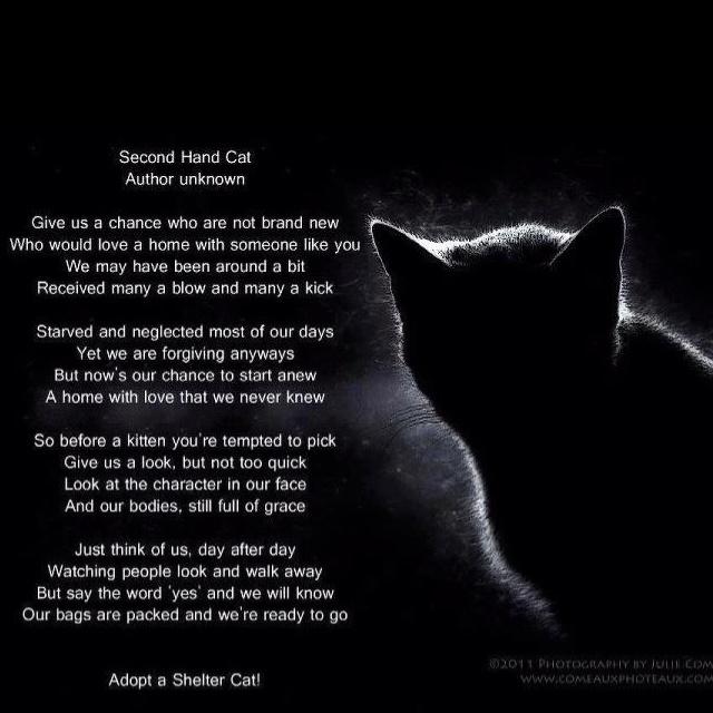 Someone Is Adopting Someone S Cat