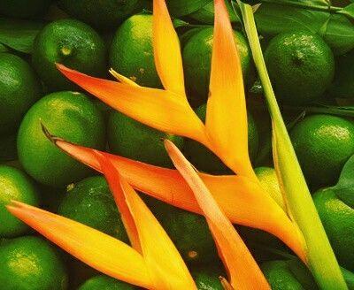 Flores tropicales..exóticas..heliconias de nuestra tierra Caribe