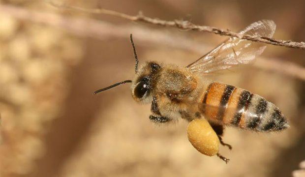 Le prove che i pesticidi sterminano le api 2
