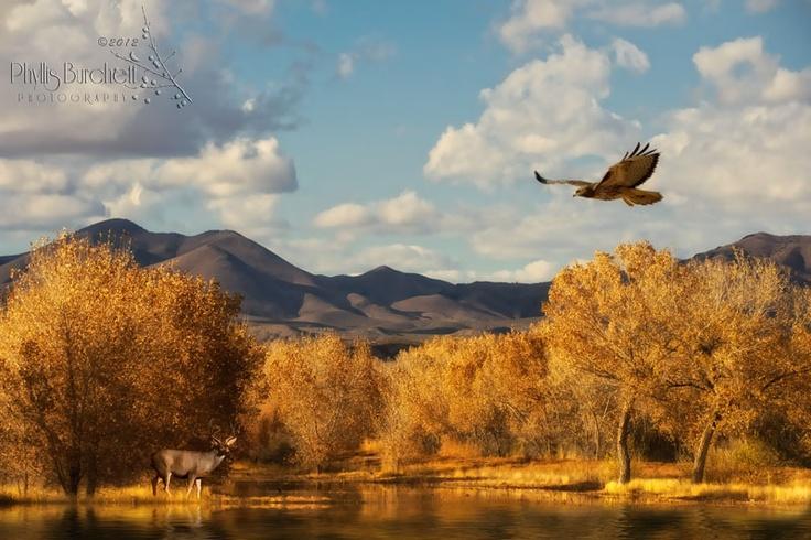 Bosque Del Apache NWR, NM by PhyllisBurchettPhoto