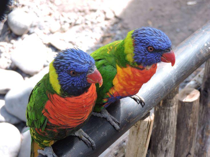 Pájaros / Buin Zoo