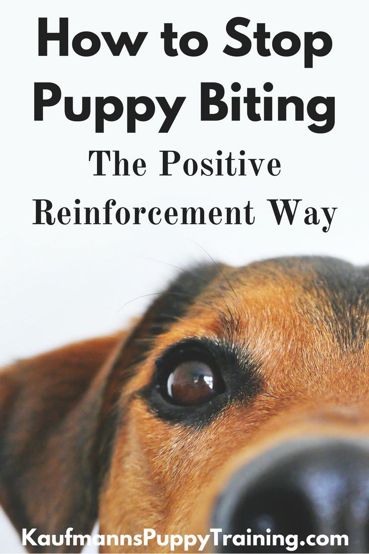 biting puppy a complete guide to stopping puppies biting - 735×1102