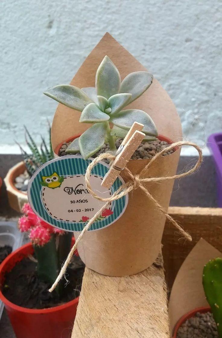 cactus y suculentas. maceta n° 6. ideal souvenirs o regalo!!
