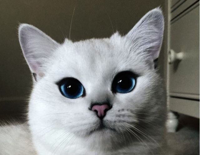 Beautiful Cats Images Download Beautiful Cats For Sale In Karachi