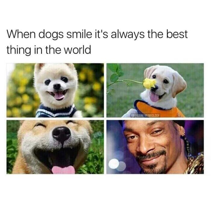 46 Dankest Memes Of The Week Smiling Dogs Memes Dogs