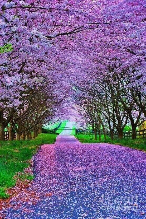 The Violet Hour will lead you to your destined path....beneath a canopy of arching violet whispers