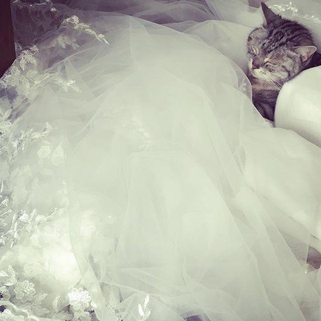 お久しぶりです! #後撮り 用に安くドレス購入しました( ´ ▽ ` )ノ 試着したら、おっきかった💦 そして振り返ったら、#愛猫 が素敵に入ってた😍😍 #ハワイ後撮り#ねこウェディング #ねこウェディングレポ #あめしょ #卒花#レストランウエディング #juno4u #catwedding #muse5cco_girlz #farnyレポ #ハナコレ#ハナコレ花嫁#lightinthebox
