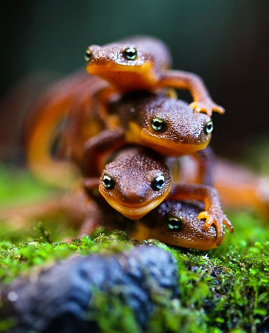 Salamanders!! I can't wait to go find these at the Fitz.