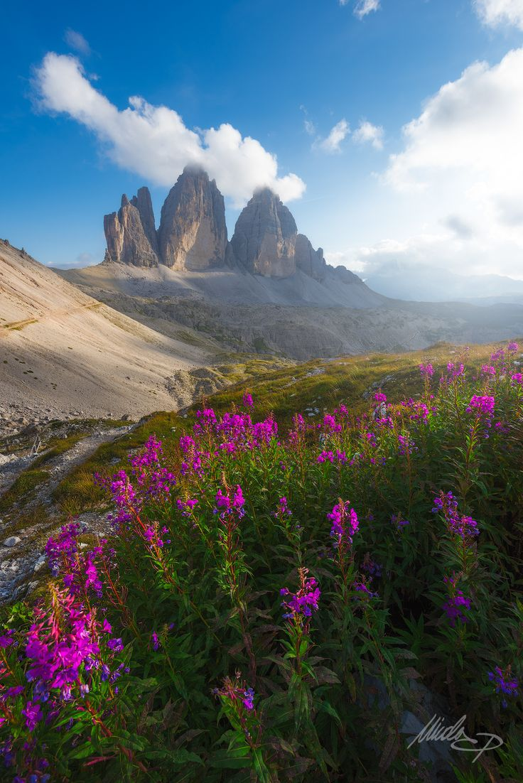 Serenity - A very peaceful moment caught on the dolomites during last summer. Here you can see the famous Tre cime di Lavaredo and some beautiful flower blossoms about two hours before sunset.