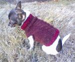 Free Dog Coat and Dog Sweater Patterns
