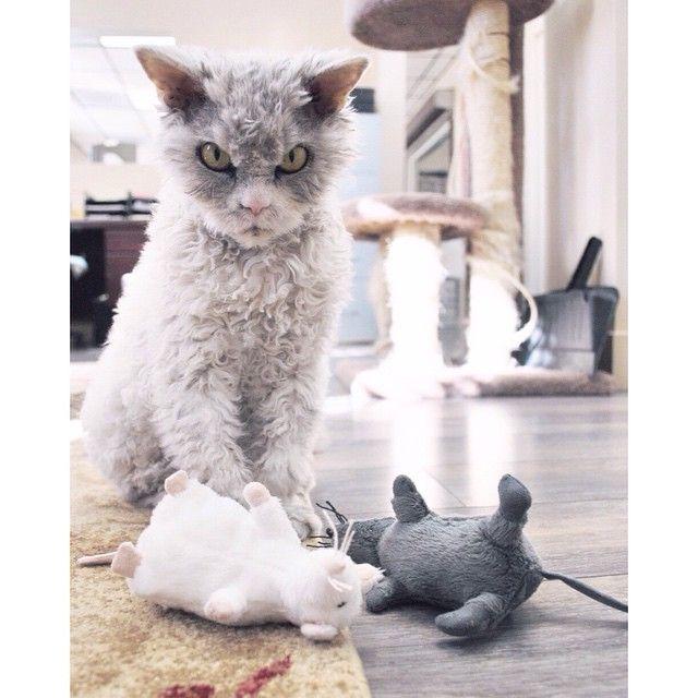 Albert, le chat au regard de tueur - Image