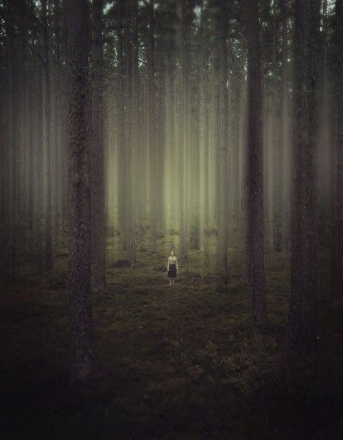 WaldPhotos, Inspiration, The Challenges, Dark Forests, Trees, Nature Photography, Kirill Vorontsov, Into The Wood, Into The Wild