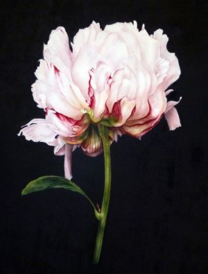 Peony On Black by Marie Burke Art - selected for a 'Pretty Dark' Folksy Friday by Heavenly Anarchist
