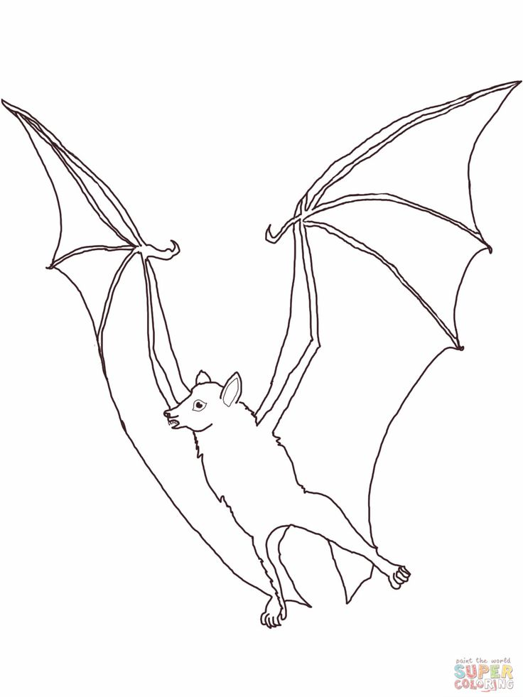 fruit bat coloring pages - photo#5