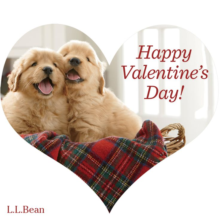 19 best valentine dogs cats images on pinterest cutest - Valentine s day animal pics ...
