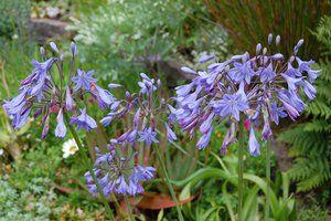 10 gode råd til haven i august