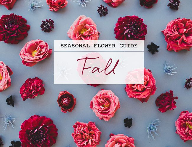 How many of you caught our Summer Seasonal Flower Guide that we shared in July? We loved hearing how much you loved it (especially on Instagram + Facebook!) and we got tons of requests to bring back this fun flower column for fall. Well today is the day + we couldn't be more excited to […]