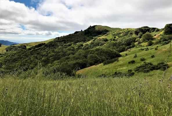 Metallica founder James Hetfield donates over 1000 acres of open space to the Marin Agricultural Land Trust to create an agricultural conservation easement