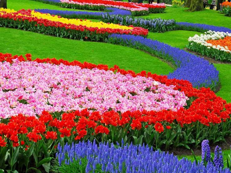 Flower Garden Designs Ideas With Bright Colorful Great Flower Bed Ideas