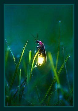 Glow - worm.... so special ♥ ✿⊱╮☆