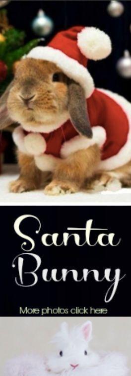 bunny rabbit, santa bunny, bunnies in costumes, christmas bunny, christmas rabbit, Christmas costumes pets