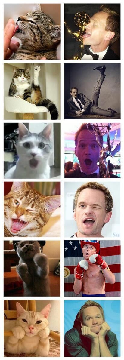 Neil Patrick Harris is a cat...I just have to say I love him so much xD