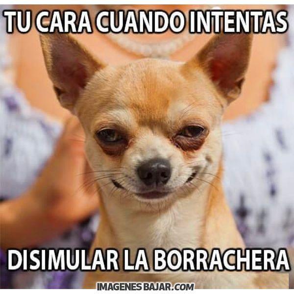 Imagenes De Cumpleanos Para Amigo Borracho Amigos Borrachos Memes Graciosos De Animales Chistoso