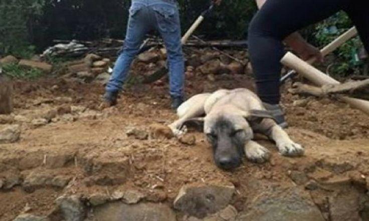ICYMI: La historia del PERRO que espera a su AMO fallecido en los escombros de México